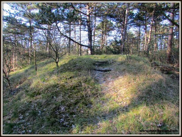 bunkerbos