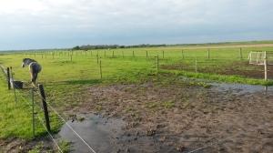 Door alle regen van de afgelopen dagen is ons land bij de pony's flink nat geworden. Vandaar dat het stuk bij Sunny een deel afgezet is.