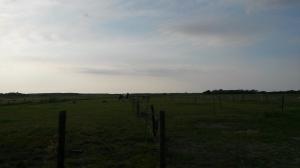 Zelfs van een afstand gaat Jack al poseren. Nu moet je wel heel goed kijken op deze foto, het was donker en grauw weer geworden 's avonds.